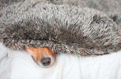 27.-28.-März-Workshop-für-Wirbelwindhunde-min
