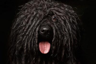Hundefriseur-BG